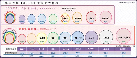 戌の梅【2018】果実肥大イメージ 和×夢 nagomu farm