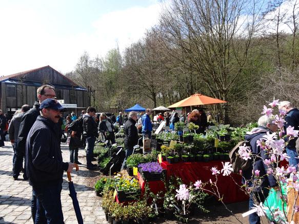 Bild: Blütenstauden, Blattstauden, Wasserpflanzen .... all das gibt es auf dem Pflanzenmart