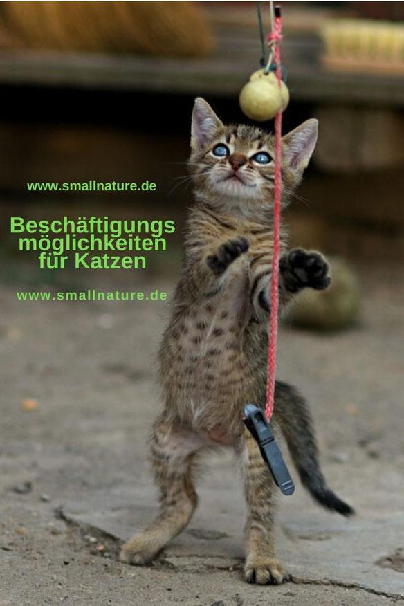 Beschäftigungsmöglichkeiten für Katzen