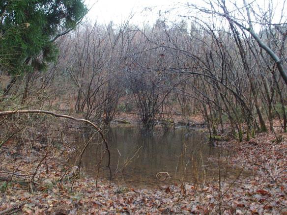ちょっとだけ足を延ばしてお池を周遊してきた。雪がないとさびしいですね。