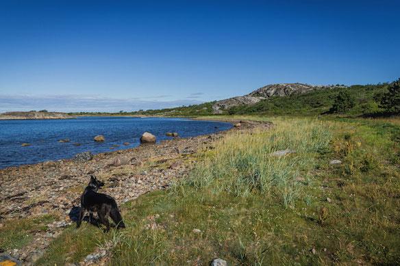 Schwarzer Hund im Kosterhavet Nationalpark, Schweden
