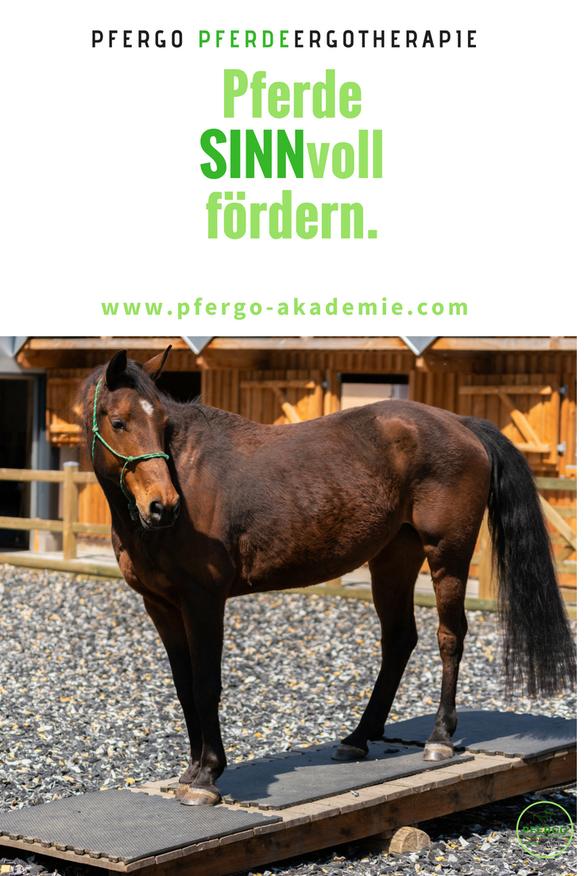 PFERGO Pferdeergotherapie: Die Basissinne des Pferdes fördern und dadurch körperlichen und mentalen Problemen vorbeugen.