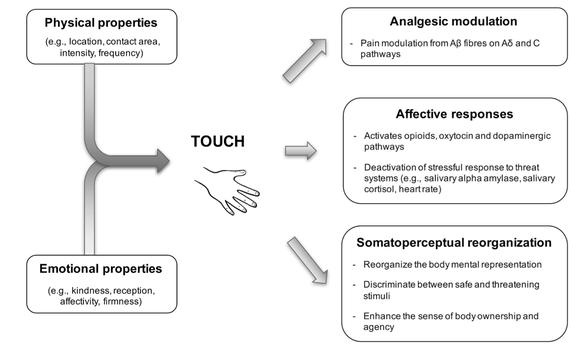 Effet du touché thérapeutique