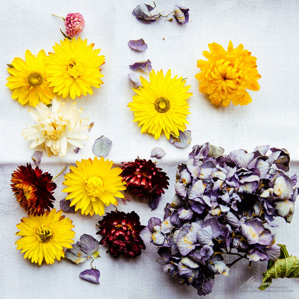 The colors yet remain: dried flowers.