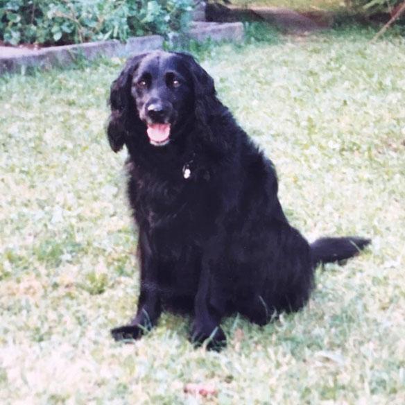 hundestrand Blog fliegen mit Hund Tipps Hundegeschichte