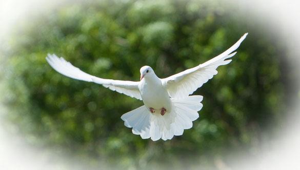 Tauben - faszinierende und wunderschöne Tiere