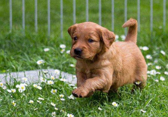 Hundetraining in Wahrenholz Mercedes Merkel