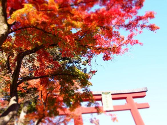 鳥居の赤と紅葉の赤。