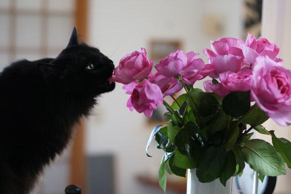 仲本律子 陶芸作家 ブログ 女性陶芸家 茨城県笠間市  花 猫