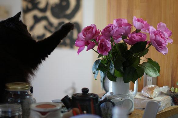 仲本律子 陶芸作家 ブログ 女性陶芸家 茨城県笠間市  花 猫 猫パンチ