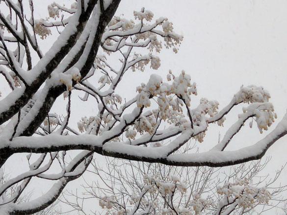 仲本律子 陶芸作家 ブログ 女性陶芸家 茨城県笠間市  雪が降った日 センダン 雪