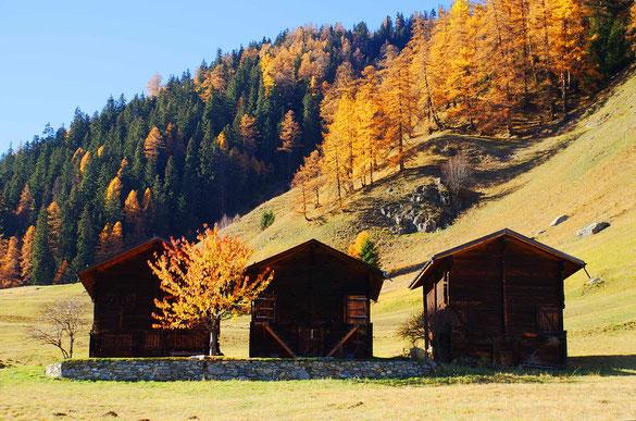 Drei Stadel oberhalb Gluringen im Herbst