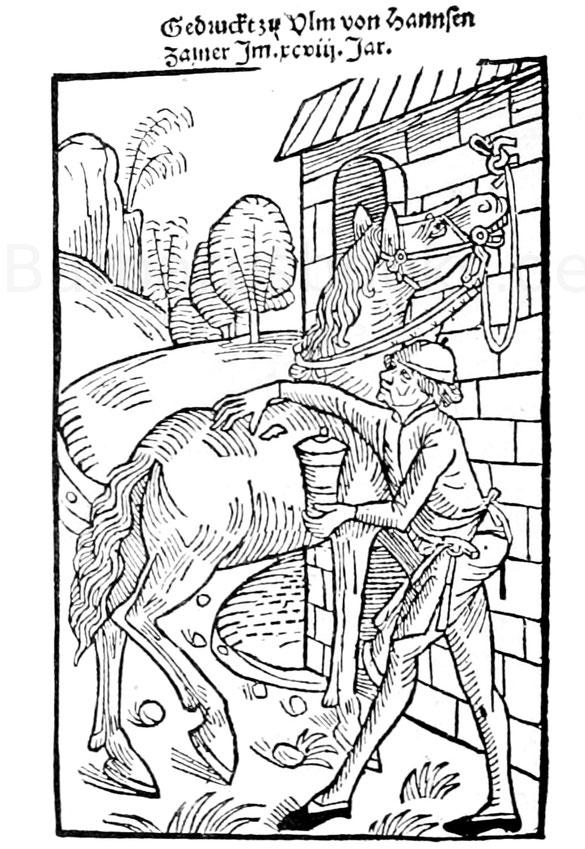 """Pferde-Einreibung aus der """"Arznei der Rosse"""", Ulm 1498."""
