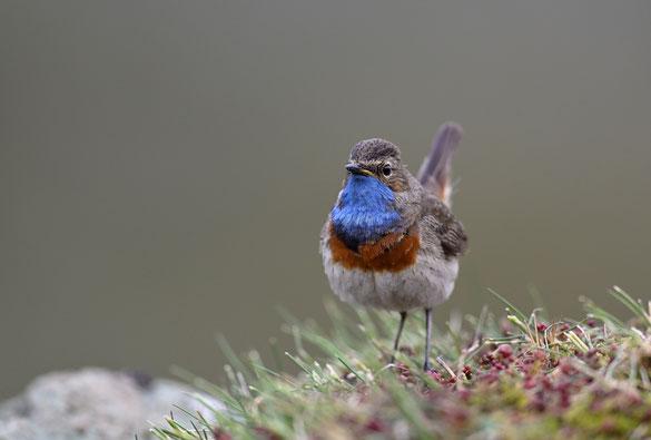 Bild des Monats Dezember
