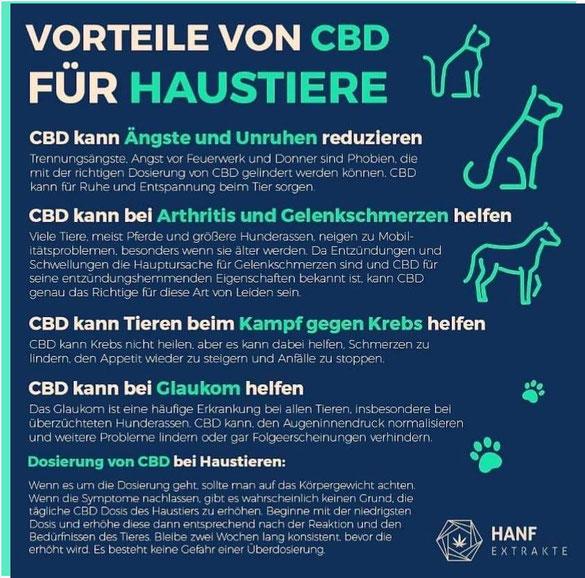 Vorteile von CBD für Haustiere - Vertriebspartner CBD Produkte Ronny Rißmann