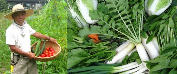 農夫と収穫された野菜