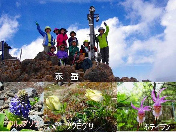 下段のお花は ウルップソウ ツクモグサ ホテイラン