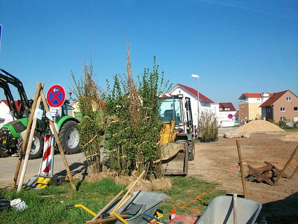 Wir verwirklichen auch Ihre Vorstellungen und Träume, Baustelle, Gartengestaltung, Baumfällung, Garten- und Landschaftsbau, Gartenbau