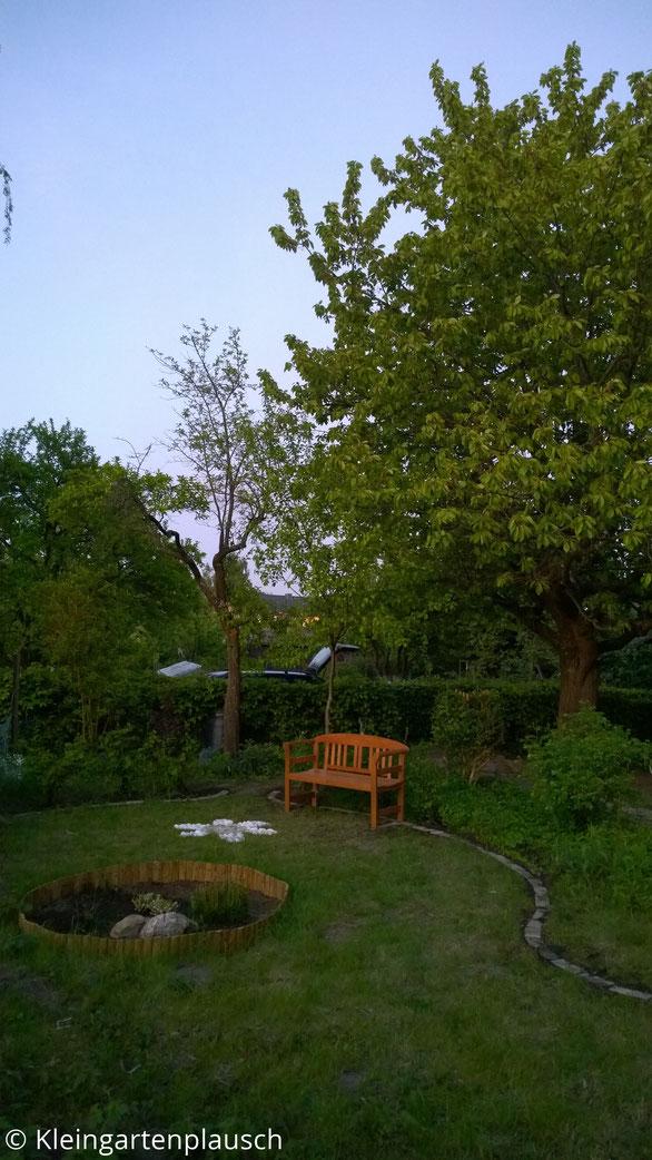Blick in den Garten mit kleinem Heidebeet, Steinblume, Gartenbank
