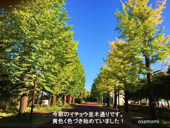 昭島市の競歩教室は、オサモミウォーキング教室昭島。昭島駅北口イチョウ並木通りで開催!