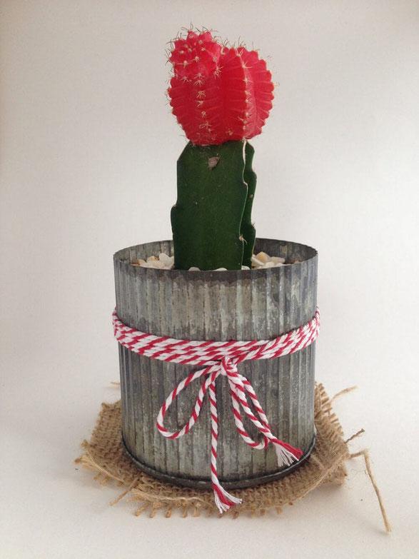 Cactus photographié dans une boîte à lumière avec un iPhone