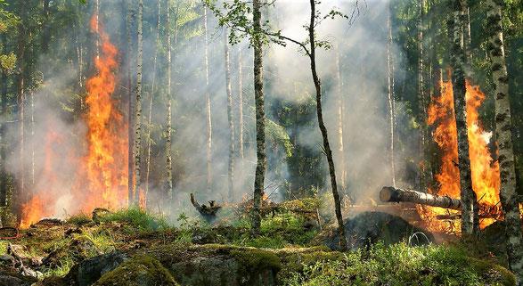 Ein Waldbrand ist nach wochenlanger Dürre recht schnell ausgelöst.