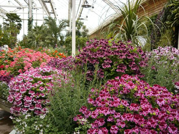 Blumenfotos vom Gewächshaus in Wisley  Garden in England