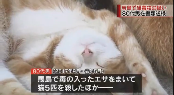 Poisoned food killed many cats sadly Source: FBS Fukuoka broadcast