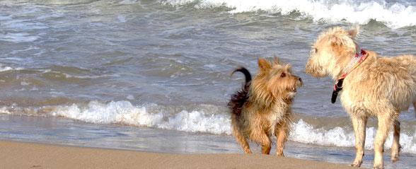 Zum internationalen Welthundetag - Tipps zur richtigen Hundehaltung - Traveldog - fair4world