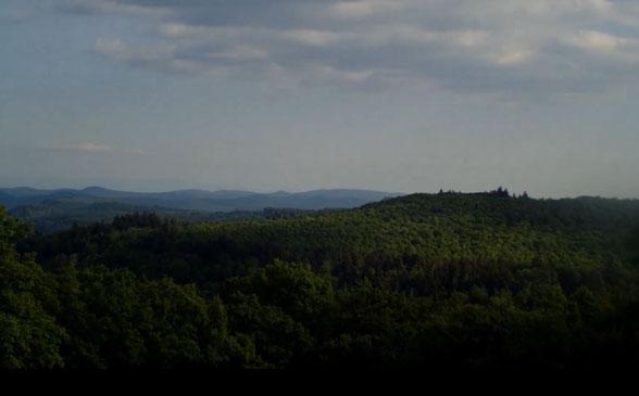 Der schöne Pfälzer Wald