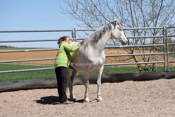 Horsemanship, Grundausbildung, Gelassenheitstraining, Schrecktraining