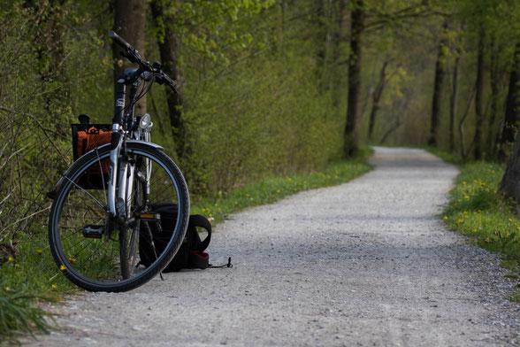 Allerdings ist der Amperdeich auch eine Hundeautobahn, wenn man den falschen Slot erwischt.