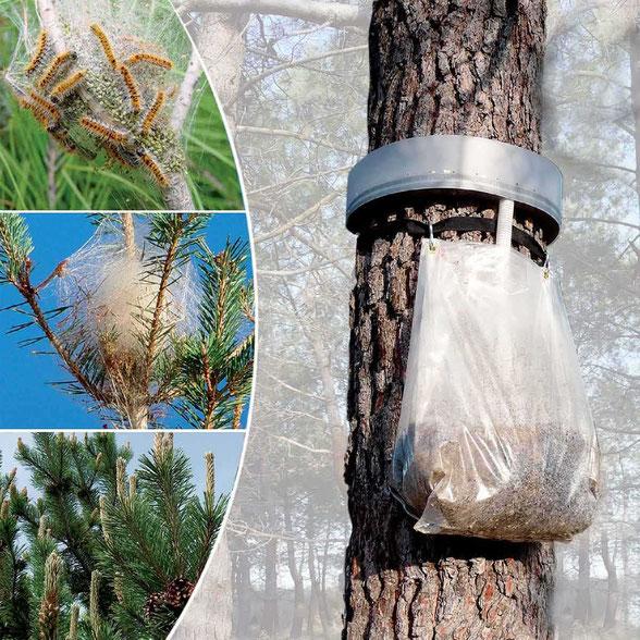 nid de chenille enlever chenille saint-gaudens lannemezan