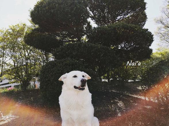 看板娘 看板犬 保護犬出身 岩手県盛岡市 ヒーリング整体 スピリチュアルヒーリング