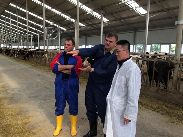 Kooperationsprojekt zur Weiterentwicklung der Rinderzucht in China