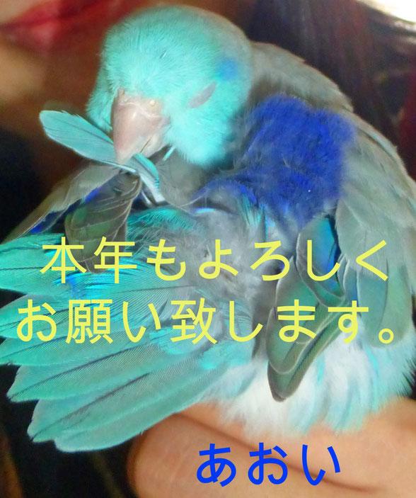 あおい夢工房 炎と楽園のアート Aoi 🐦