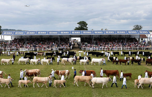 Foto: The Royal Highland Show 2018. Heb jij ooit zoveel koeienrassen bijeen gezien in de ring?