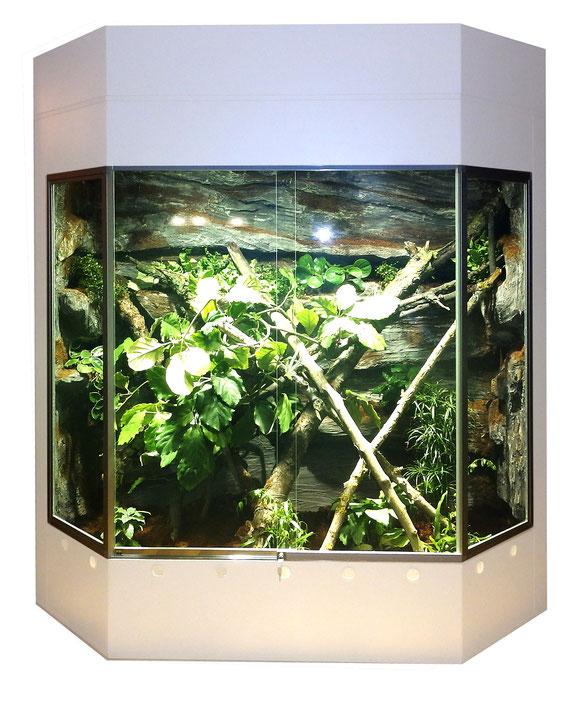 Regenwaldterrarium für Fidschi- Leguane