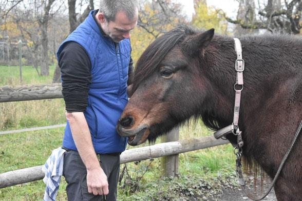 So macht die Faszien Arbeit am Pferd wirklich Spaß