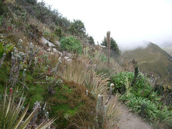 Bergwandern und Bergsteigen in Ecuador ist einmalig schön