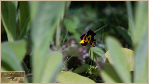 menschundnatur-unserezukunft, Blumen