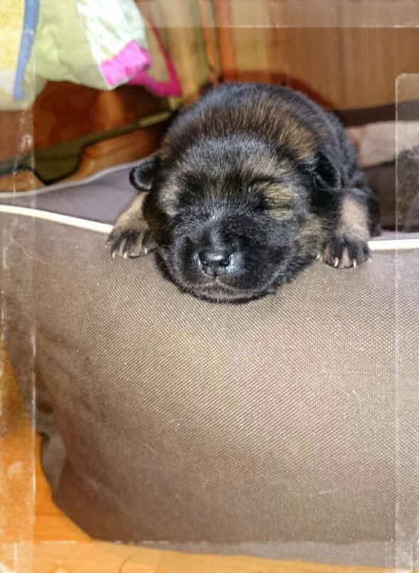 Schlafen kann man ä Hund überall