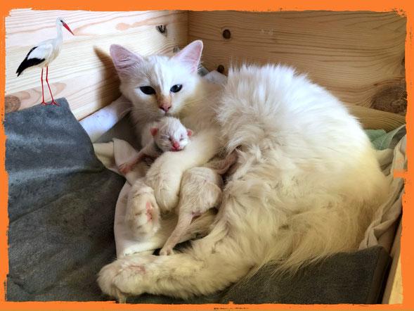 Mama Cherry mit ihren zwei Kitten