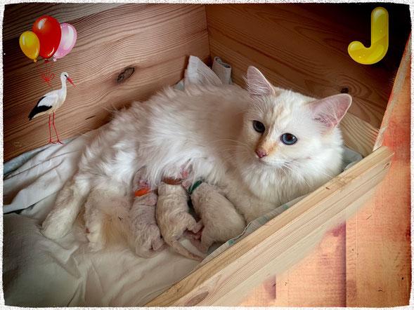 Mama Cherry mit ihren Babys
