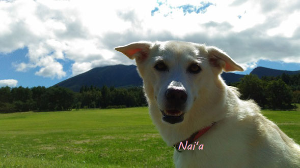 保護犬 アニマルヒーリング アニマルコミュニケーション 地球遊び