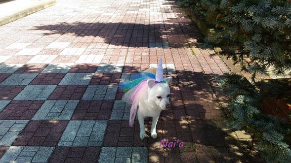 ユニコーンヒーリング unicornhealing
