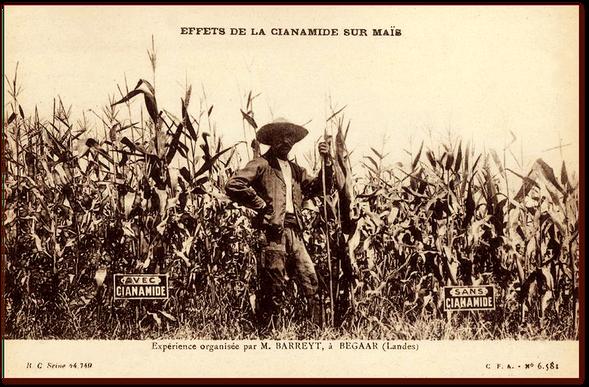 Orthe, landes, aquitaine, sud-ouest, france, maïs, hybride, millas, OGM, blé d'inde, millasson