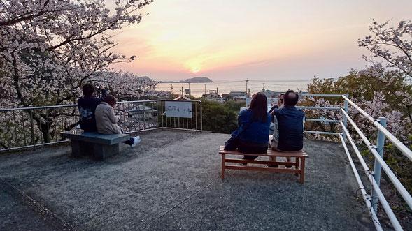福岡 糸島の鎮懐石八幡宮は桜の名所。 Sakura cherry blossom viewing spot in Itoshima, Fukuoka.