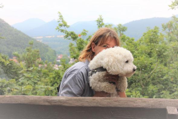 Bichon frisé Sophie Der kleine Hundeblog