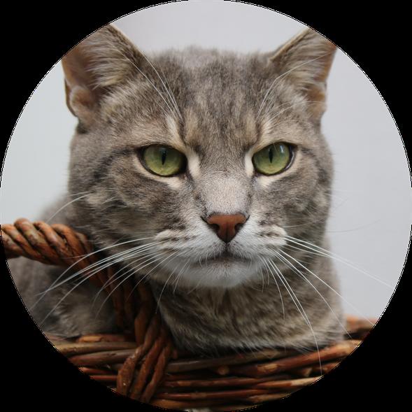 Tierkrankenversicherung - Katzenkrankenversicherung - Versicherungsmakler Rüsselsheim - Versicherungen checken - Versicherungsmakler Groß-Gerau
